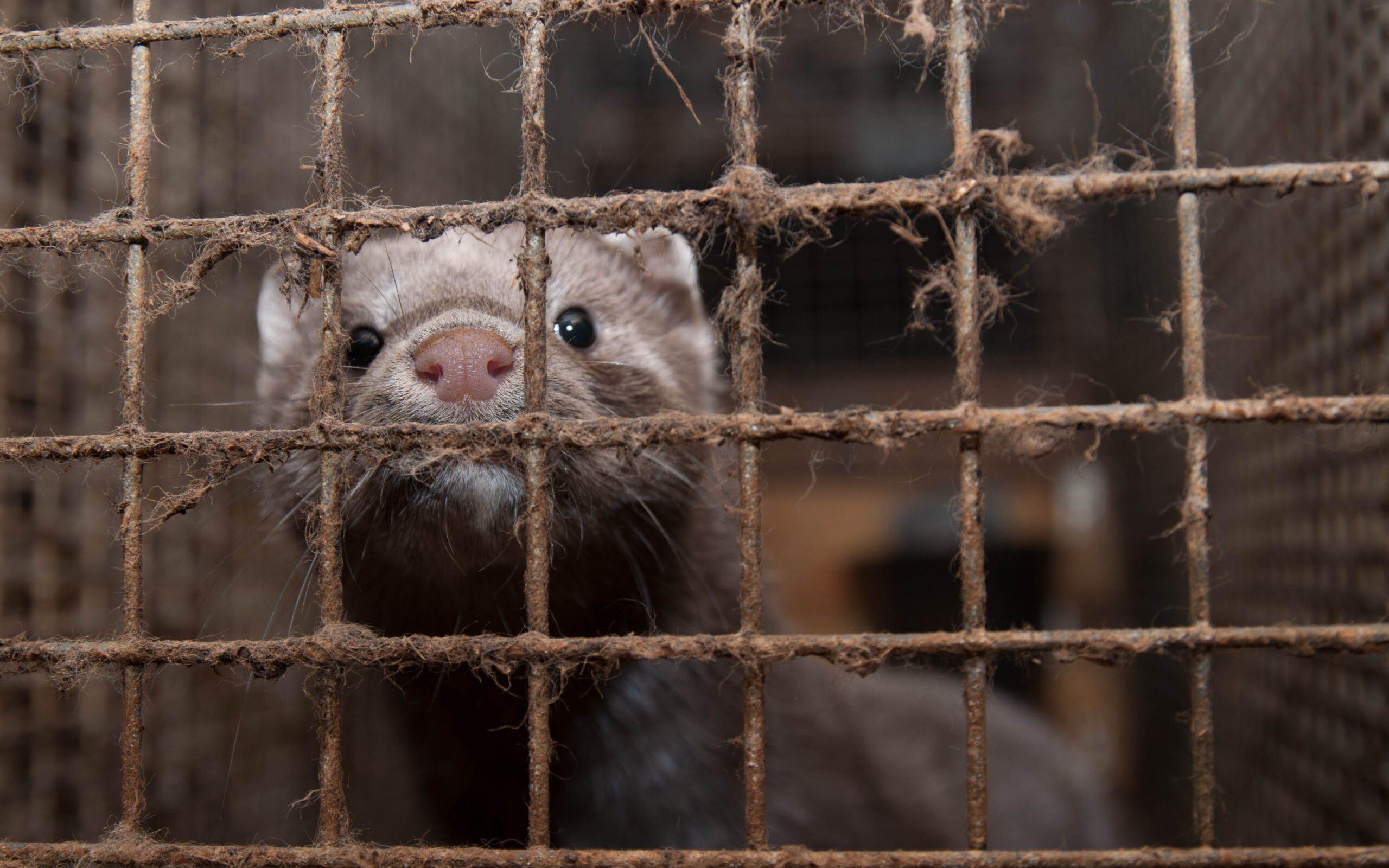Over 880 000 oppfordrer verdenslederne om å stoppe pelsindustrien globalt. Foto: Anima